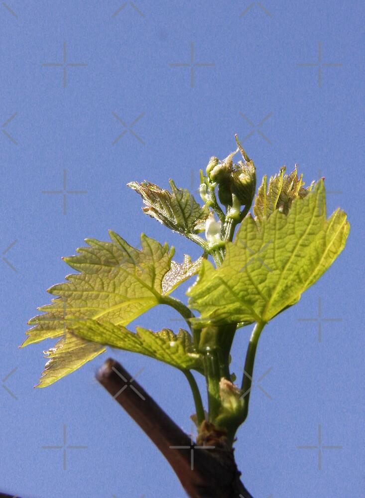 Leafing! by Heather Friedman