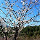 more of spring by mkokonoglou