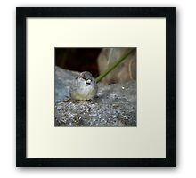 Posing House Sparrow on a Rock II Framed Print