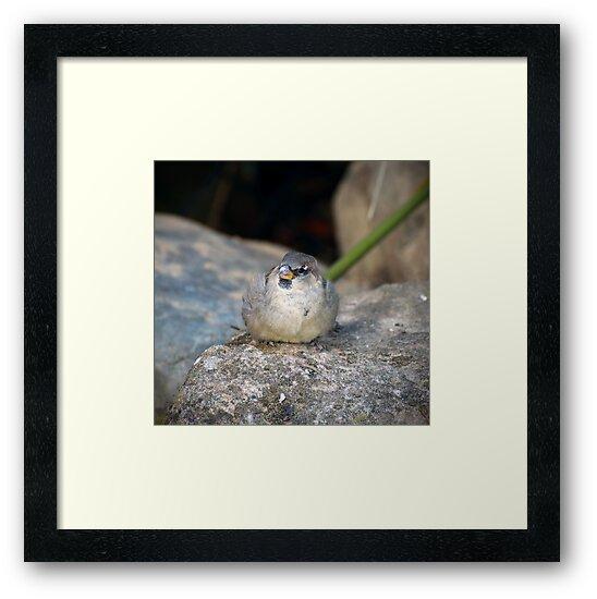 Posing House Sparrow on a Rock by Richard Eijkenbroek