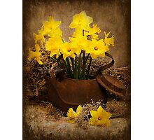 Rusty Teapot in the Spring Photographic Print