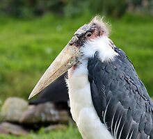 Marabou Stork by Richard Eijkenbroek