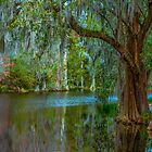 Trees in the Lowcountry  by Mary Campbell