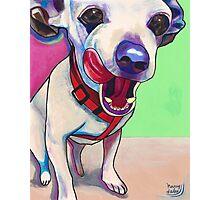 """Scrumptious"" Chihuahua Art Photographic Print"