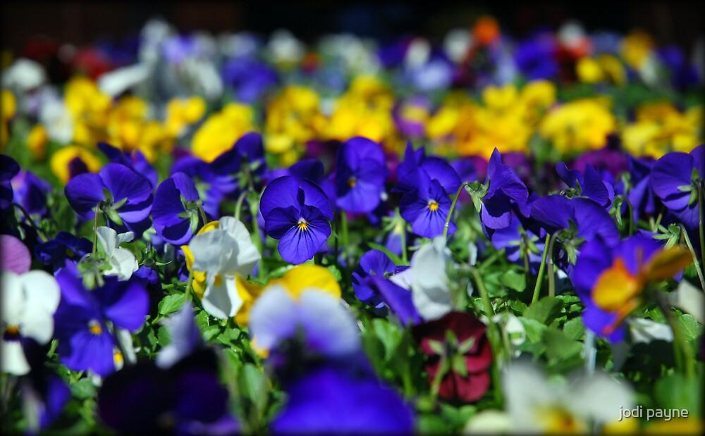 Colorful by jodi payne