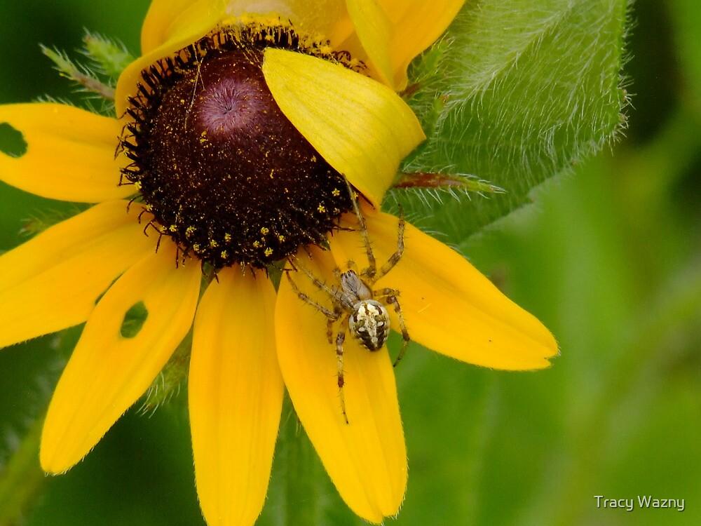 Small Jewel In My Garden by Tracy Wazny