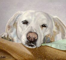 Dreamy Eyes Labrador Retriever falling asleep by Nancy Daleo