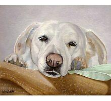 Dreamy Eyes Labrador Retriever falling asleep Photographic Print