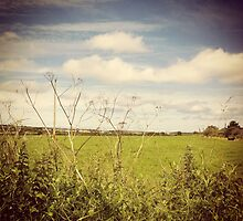 Irish Green Fields by lanesloo