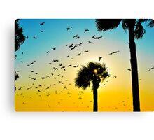 A Florida Evening Canvas Print