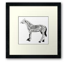 Horse Anatomy Framed Print