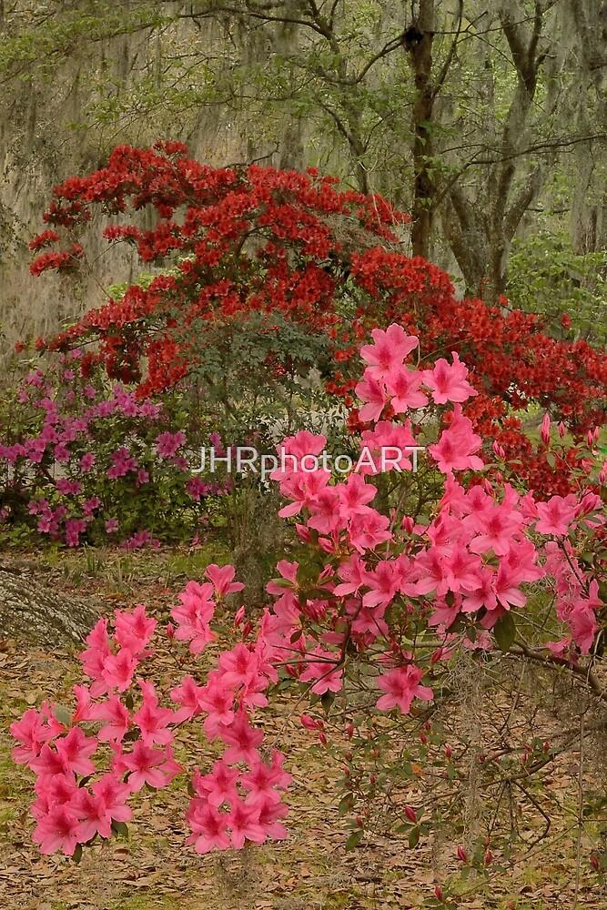 The Azaleas In Bloom by JHRphotoART