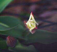 In My Garden by Lynn Wiles