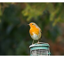 Robin on Feeder Photographic Print