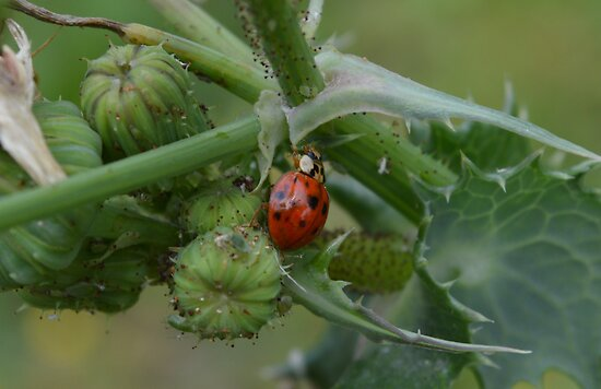 Lady Bug and Friends by paulbl
