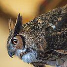 Swooping Owl by gharris