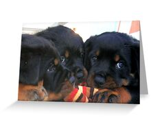 Three Rottweiler Puppies Playing Tug Greeting Card