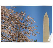 Cherry Blossoms in Washington, DC ^ Poster