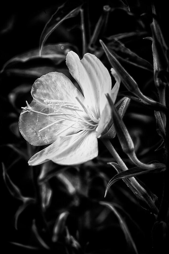 One Bloom by Bob Larson