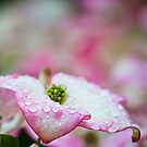 Pink Dogwood Flower Lay by Orbmiser