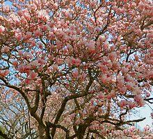 Springtime in Washington DC - 2  ^ by ctheworld