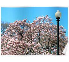 Spring Has Sprung! Poster