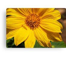 Sunflower & Shadows  Canvas Print
