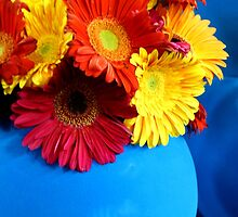 MIFGS - Gerberas - Three by Sammy Nuttall