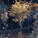 After the Bushfire @ Chillago FNQ by Chris Cohen