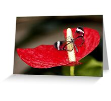 Glasswing on Lily Greeting Card