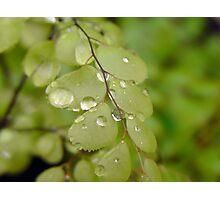 Rain drop on fern Photographic Print