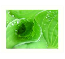 Droplets on leaf whorls Art Print