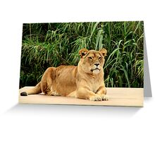 At the Zoo - The Matriarch Greeting Card