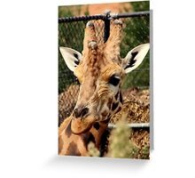 Well, Hello There! Greeting Card