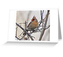Female Cardinal Greeting Card