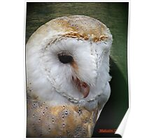 """""""Taken at the """"Screech"""" Owl Sanctuary""""  """" Name of the owner"""" Poster"""