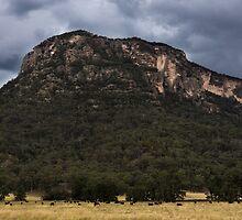 Mountains At Glen Davis by Mandy  Harvey