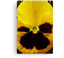 Golden Black Eyed Pansy Violet Yellow Flower Canvas Print