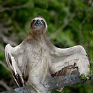 The winged sloth by Felfriast