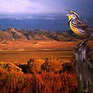 Evening Meadowlark by Arla M. Ruggles