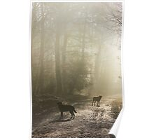 Misty Woodland Walk Poster