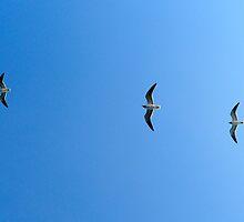 Seagulls by K. Abraham