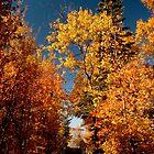 Fall walk way by Karl  Zielke