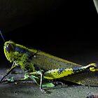 Grasshopper by Kelvin Won