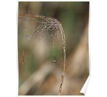 Sparkling Spider Web Poster
