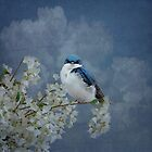 Tree Swallow by swaby