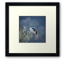 Tree Swallow Framed Print