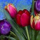Colourful Tulips by Jane-in-Colour