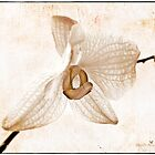Vintage orchid by Olga