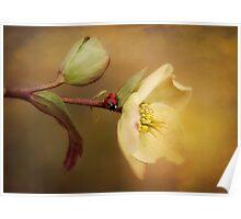 Ladybird..... Poster